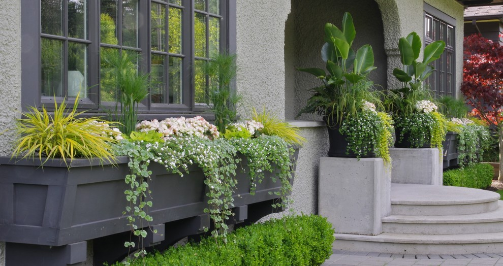 Cufflink Box Landscape Traditional with Container Plants Dark Wood Trim Entrance Entry Foliage Front Door Grasses Potted