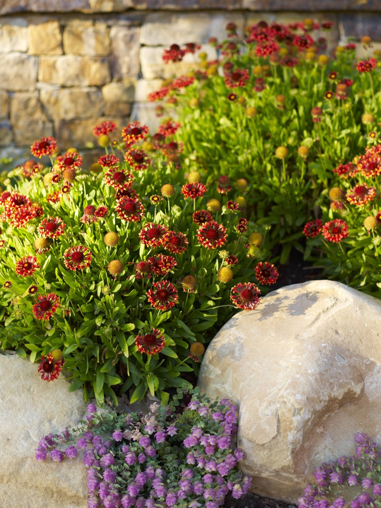 Fake Flower Arrangements Landscape Mediterranean with Boulder California Garden Groundcover Low Maintenance Low Water Mediterranean Natives Natural Outdoor