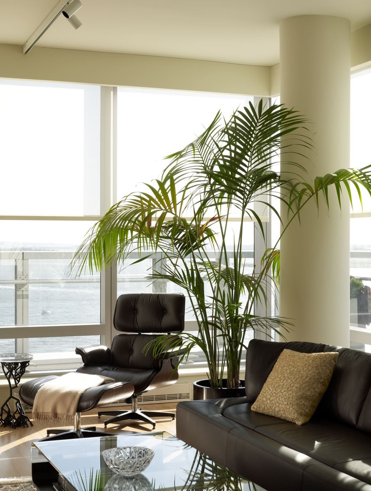 Fake Palm Trees Living Room Contemporary with Columns Container Plants Corner Windows Glass Coffee Table Glass Wall House Plants