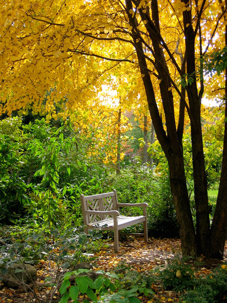Glass Tea Kettle Landscape Traditional with Autumn Bench Canopy Cercidiphyllum Japonicum Contemplative Fall Fall Color Garden Bench Garden