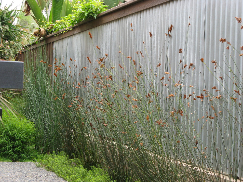 Tall Plant Stands Landscape Contemporary with Border Plantings Corrugated Metal Fence Galvanized Metal Fence Grasses Metal Fencing